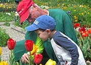 Stopping to smell the tulips